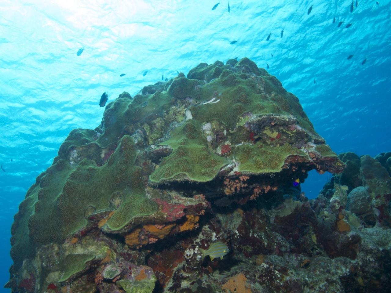 Onderwaterlandschap op Bonaire